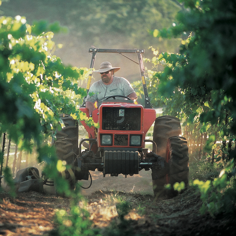 Tractor Rider in Murphys Vineyard